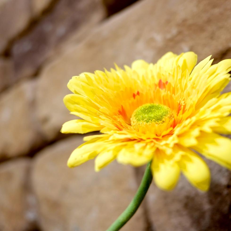 Wallflower by Dust Gaudan